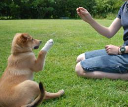 Kutyaiskola