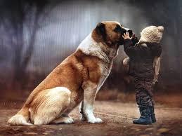 Hűséges kutya