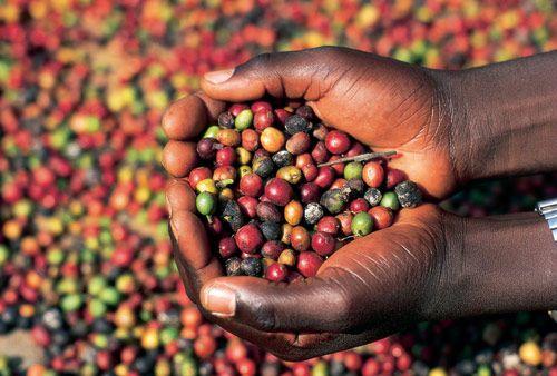 Etióp kávé