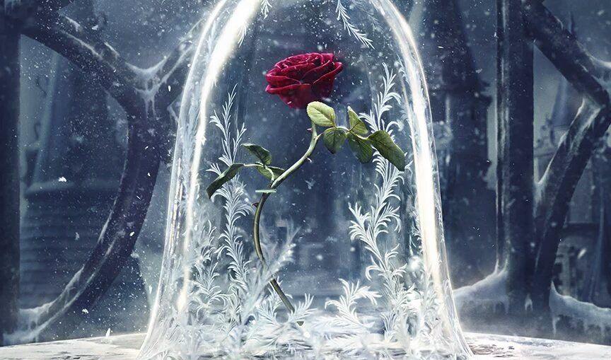 Szépség és a szörnyeteg rózsa