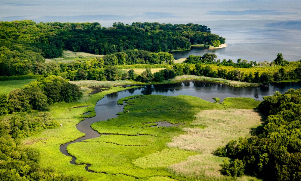 Chesapeake-öböl