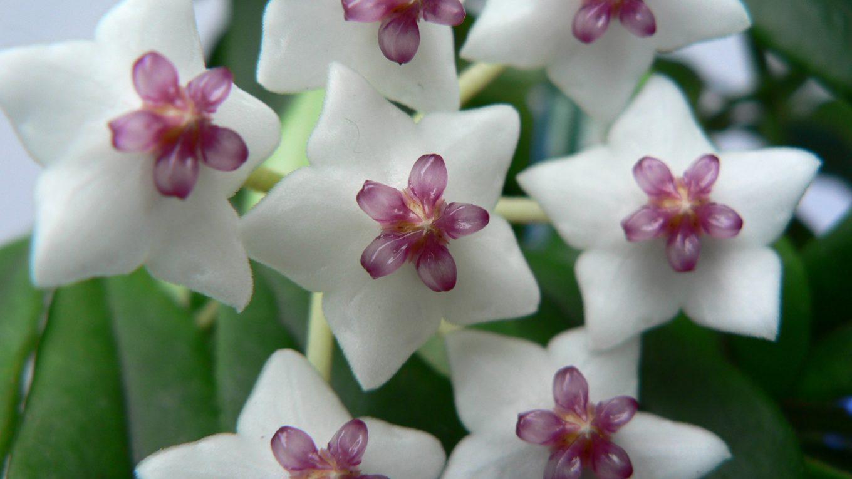 A 10 legjobb növény egy kollégiumi szobához